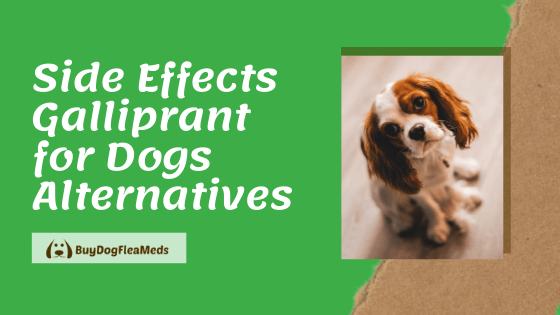 Side Effects Galliprant for Dogs Alternatives