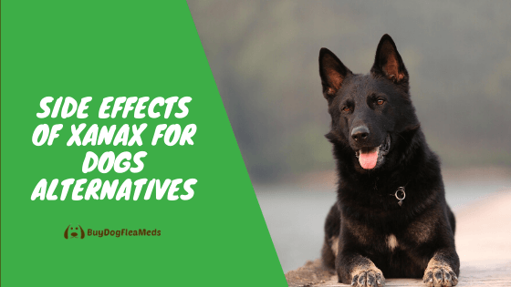 side effects of xanax for dogs alternatives