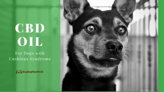 cbd oil for dogs with cushings syndrome
